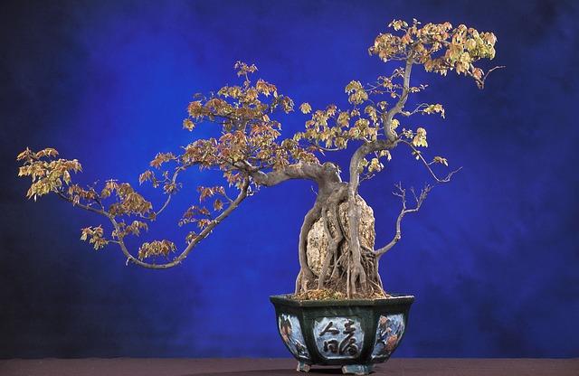 Pflanzen als Geschenke zum Einzug